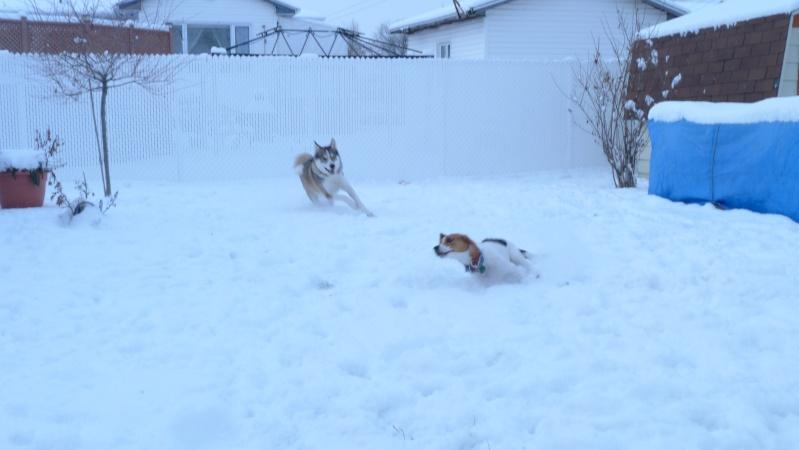 Enfin de la neige !  P1010118