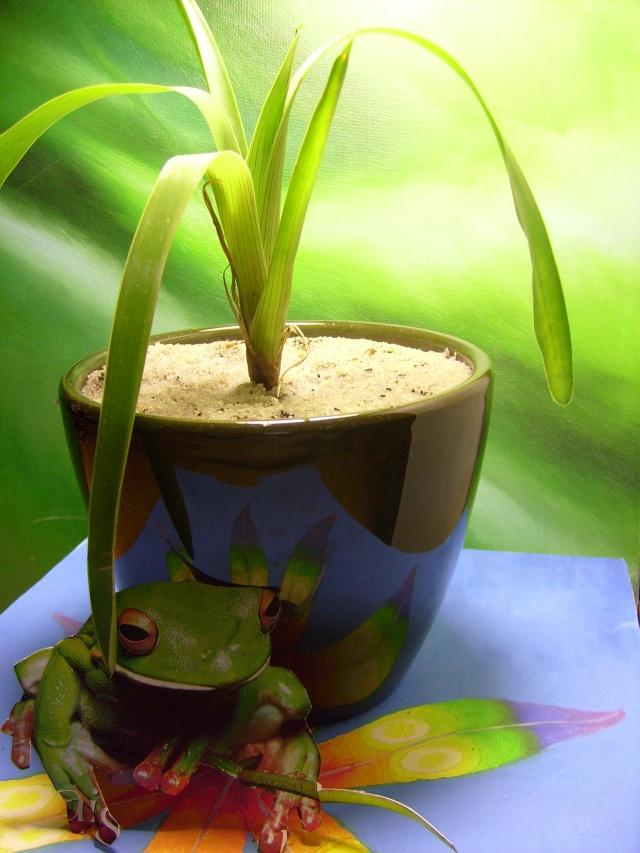 Plantes de dioséra - Page 2 05_04_19