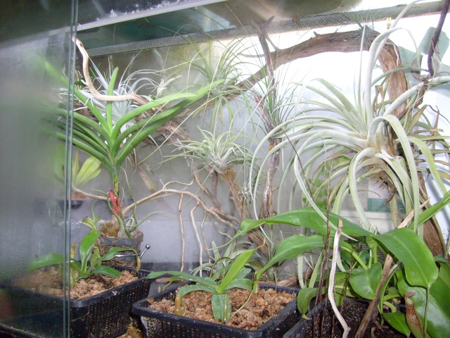Plantes de dioséra - Page 2 05_04_20