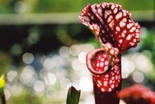 Plantes de dioséra - Page 2 F1010013
