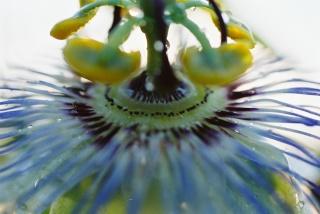 Plantes de dioséra - Page 2 F1010014
