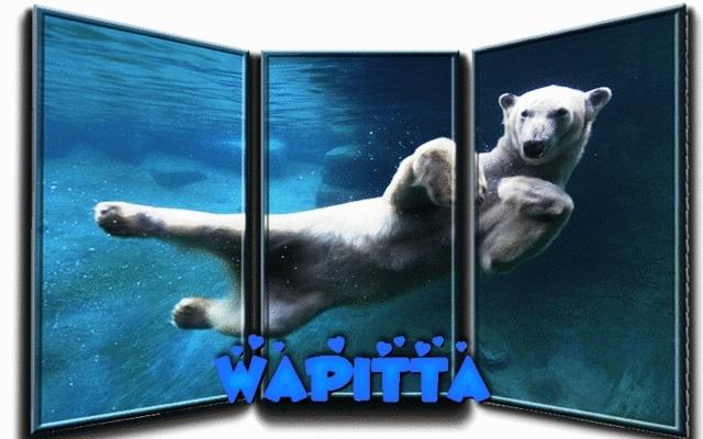 Galerie de Wapitta Bibifa10