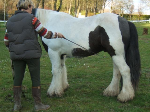 Calculer le poids de son cheval Halfwa54