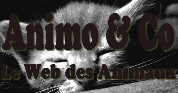Animo & Co