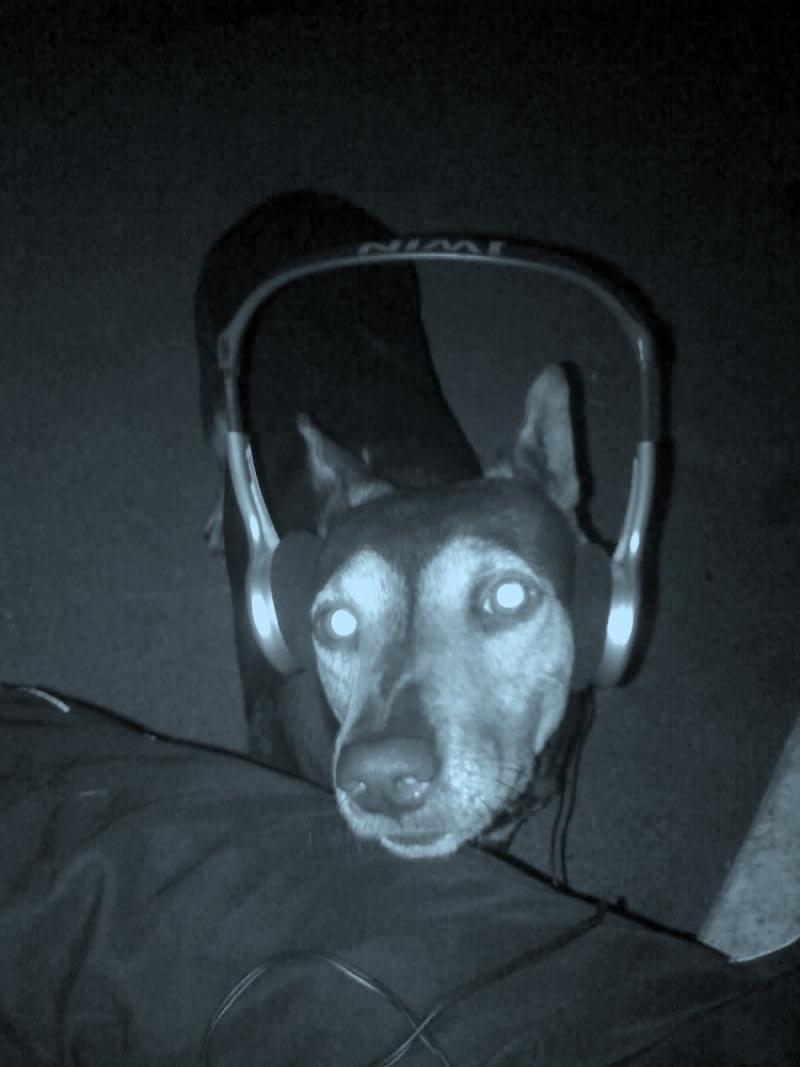 Tema: Habla Sobre tu mascota o de animales, y pon fotos. 25-03-10