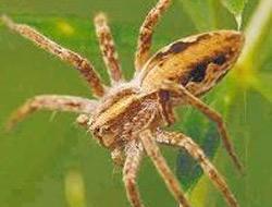Zehirli Örümcek'lerden Hastaneye Baskın 5737110