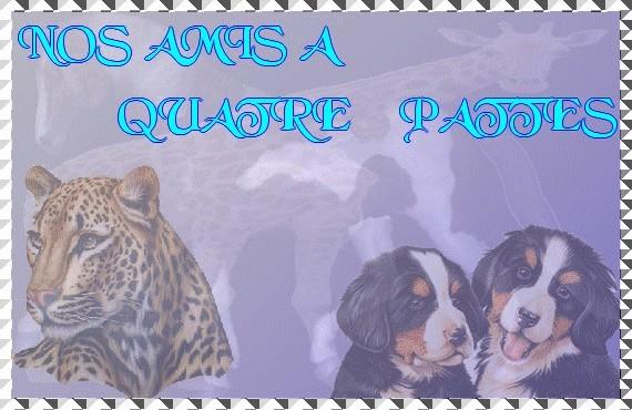 NOS AMIS A 4 PATTES & AUTRES ANIMAUX