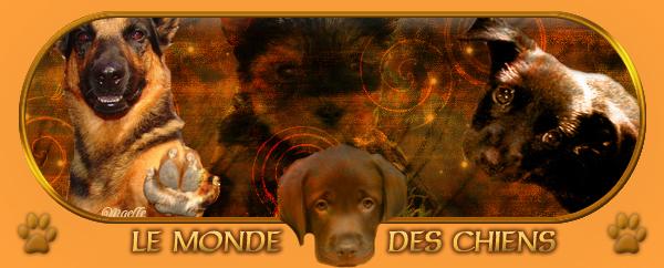 Le monde des chiens