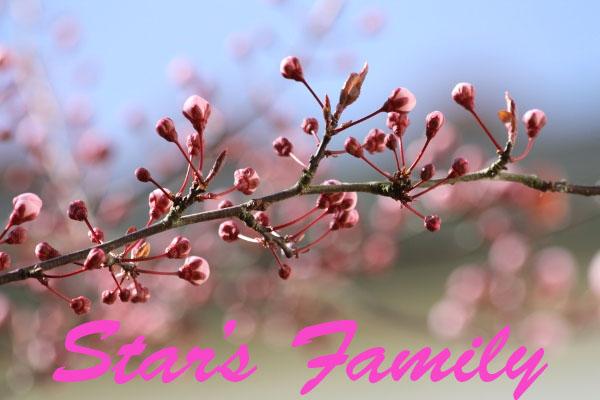 Star's Family