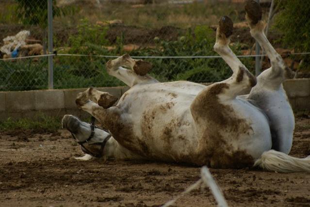Vos plus belles grimaces de cheval et photos gag .... Dsc08310