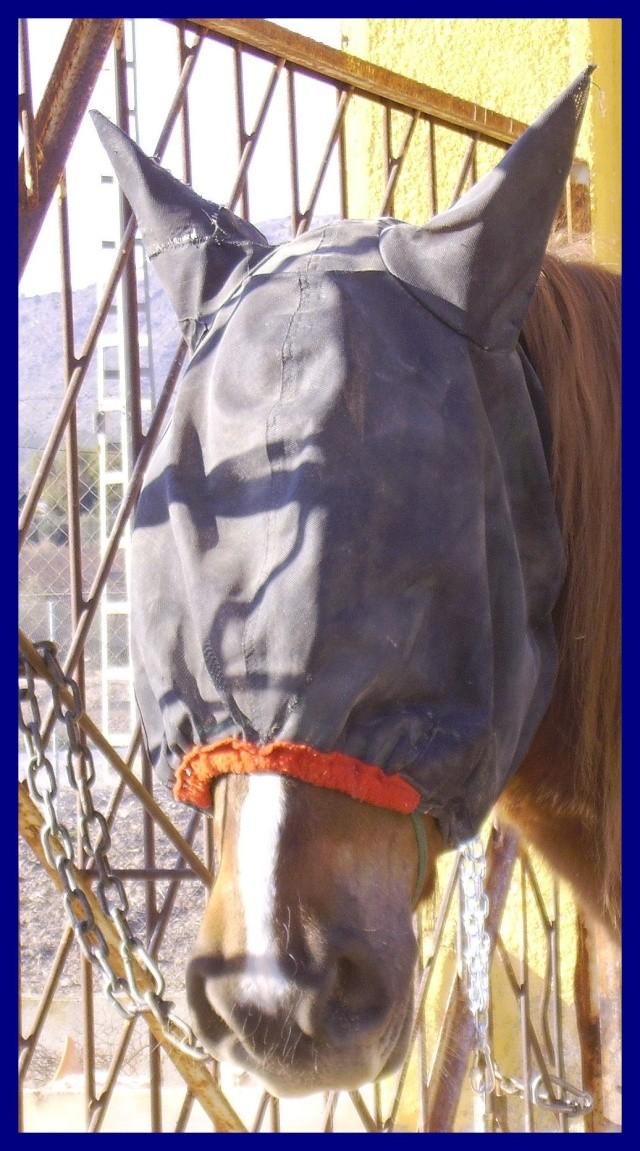 Vos plus belles grimaces de cheval et photos gag .... Sunny_14