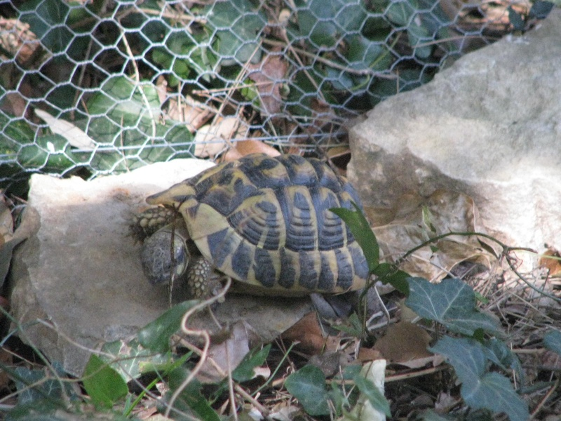 mes tortues =D Img_0027