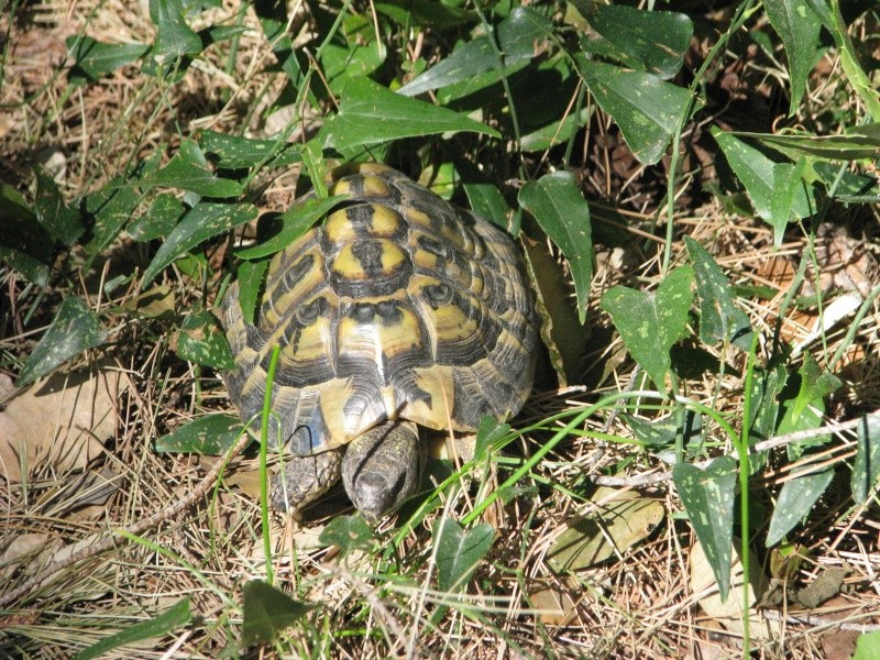 mes tortues =D Img_0028