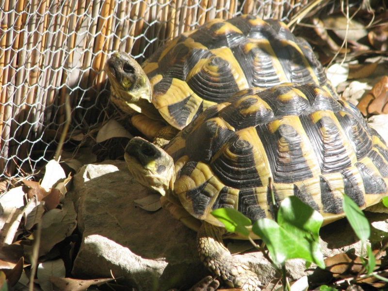 mes tortues =D Img_0114