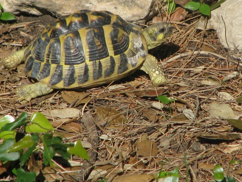mes tortues =D Img_0115