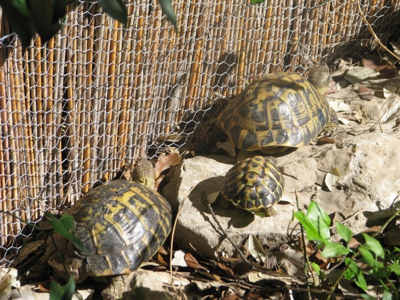 mes tortues =D Img_0116