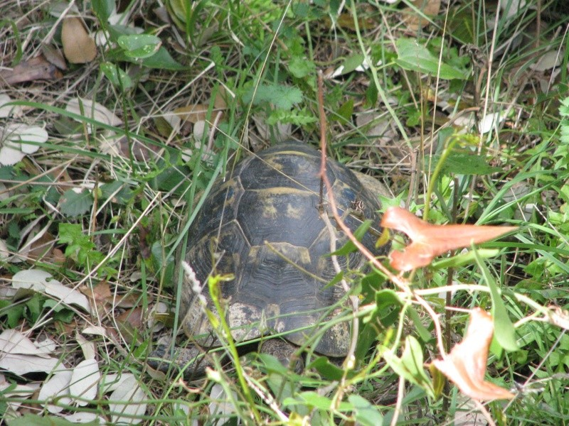 mes tortues =D Img_0117