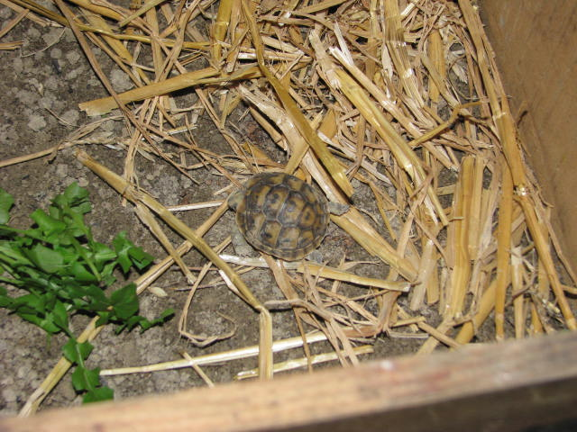mes tortues =D Img_0610