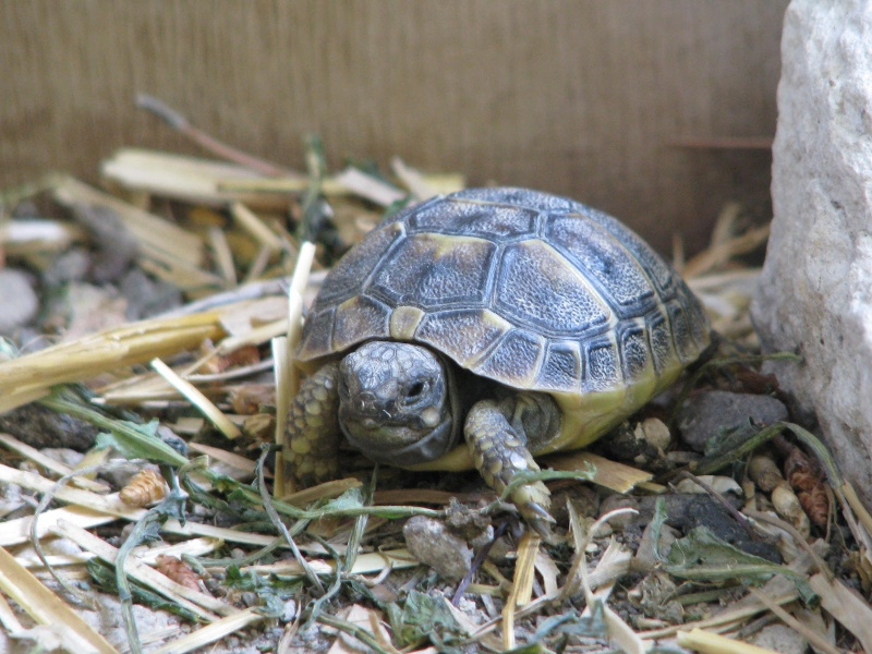 mes tortues =D Img_4124