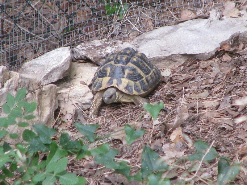 mes tortues =D Img_4315