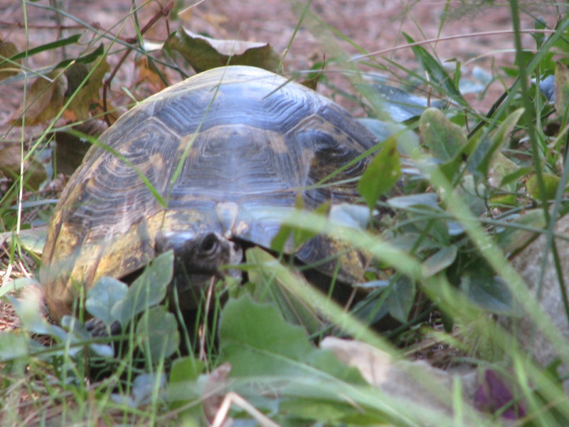 mes tortues =D Img_4317