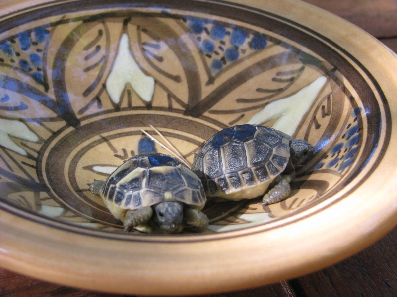 mes tortues =D Img_4414