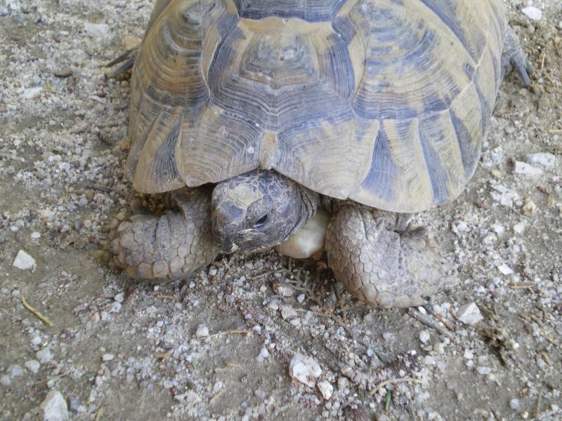 mes tortues =D Imgp0816
