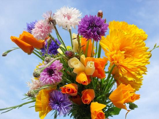 samedi 17 septembre Fleurs28