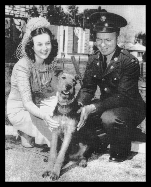 Military Dog10
