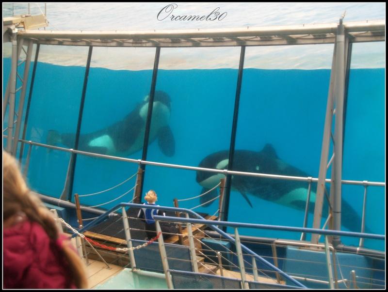 [Photos] Orques aux vitres - Page 2 P1010814
