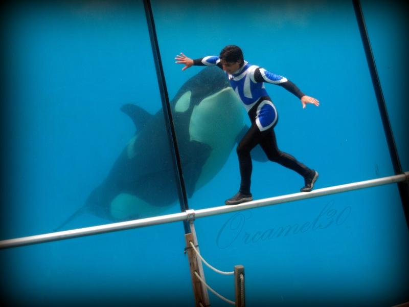 [Photos] Orques aux vitres - Page 2 P1011212