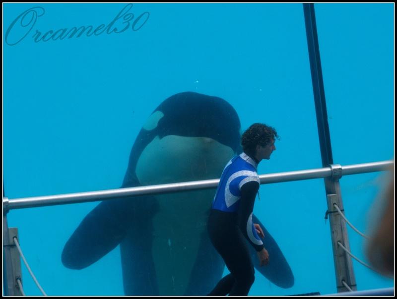 [Photos] Orques aux vitres - Page 2 P1011611