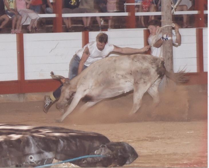 ce qu'il faut faire Vache_12