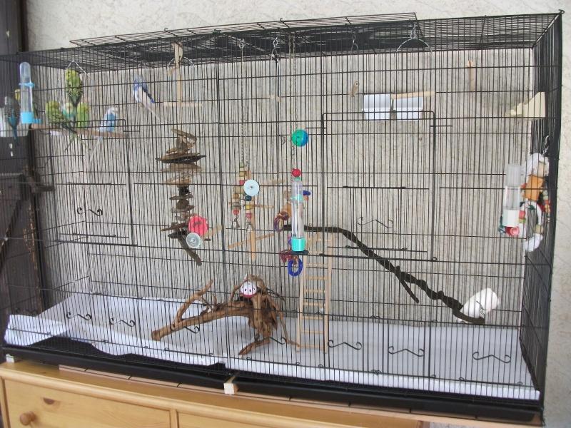 La famille s'agrandit : cages XL et volières d'intérieur Cage_n10