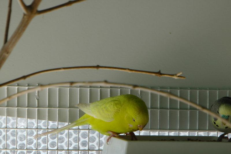 Une volière où il fait bon vivre : idées d'aménagement  Polly_10
