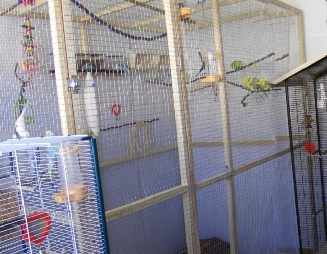 La famille s'agrandit : cages XL et volières d'intérieur Volier12