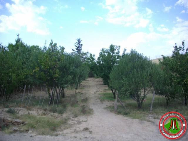 دوّار الكاف لحمر أولاد سلام ولاية باتنة (تعرف على جمال الريف الجزائري) Imgp3410