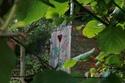 Pour les plantations...conseils, astuces... Thumb_10