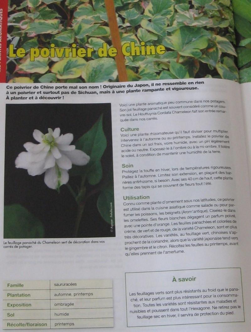 Plantes aromatiques 26_09_31