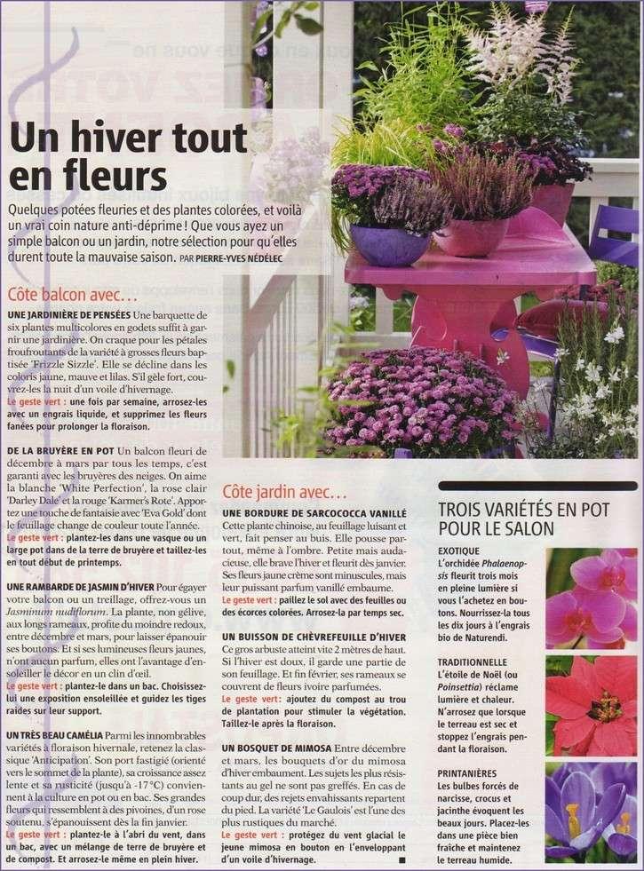 Jardinière d'hiver Img_0139