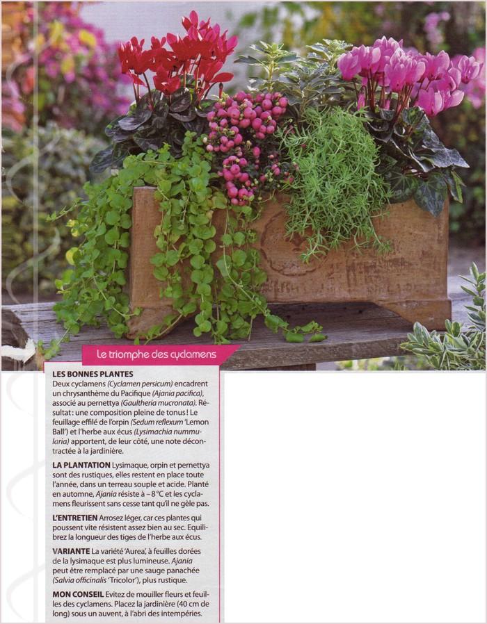 Jardinière d'hiver Img_0180
