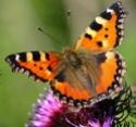 Refuge pour papillons 29880010