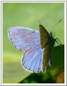 Refuge pour papillons 31406910