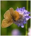 Refuge pour papillons 33398310