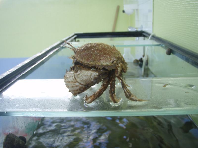 Identification crabe... P6060011