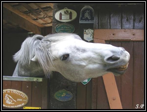 Vos plus belles grimaces de cheval et photos gag .... Operly15