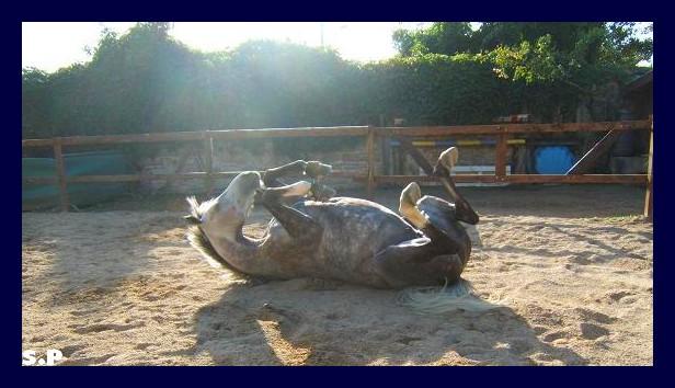 Vos plus belles grimaces de cheval et photos gag .... Operly16