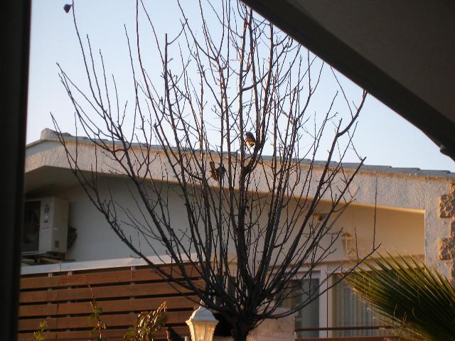 Pajaricos en mi jardín - Página 2 P1040612