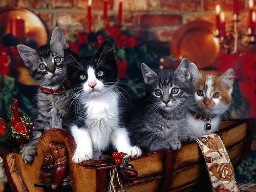 Christmas !!!!!!!!!!!!!!! 31688111