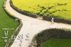 Phim Spring Waltz - Điệu valse mùa xuân 50756112